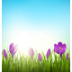 Green Grass Lawn with Violet Crocuses - GraphicRiver Item for Sale