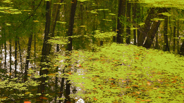 Pond & Reflection Tree