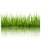 Green Grass Lawn with Reflection on White - GraphicRiver Item for Sale