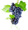 Fresh bunch of grapes with leaves isolated on a white background - PhotoDune Item for Sale