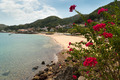 View of beach and flowers of Isla Taboga Panama City - PhotoDune Item for Sale