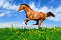Sorrel Horse Gallops - PhotoDune Item for Sale
