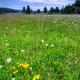 Wild Meadow Background - PhotoDune Item for Sale