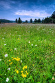 Wild Meadow Background - PhotoDune Item for Sale