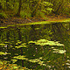 Forest & Pond - VideoHive Item for Sale