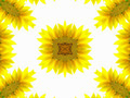 Abstract pattern of sunflower - PhotoDune Item for Sale