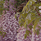 Cascading Purple Flowers - VideoHive Item for Sale