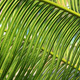 Background of tropical ferns - PhotoDune Item for Sale