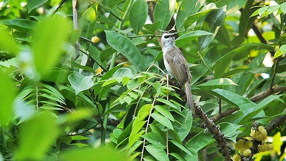 VideoHive Bird on the Tree 10591474