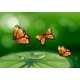 Butterflies and Water Lily  - GraphicRiver Item for Sale