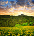 Sunset over the Bavarian Forest  - PhotoDune Item for Sale