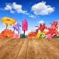 Spring flowers - PhotoDune Item for Sale
