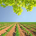 spring field - PhotoDune Item for Sale