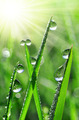 dew drops - PhotoDune Item for Sale