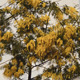 Yellow Tree Near A Building - VideoHive Item for Sale