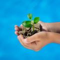 Young plant in hands against blue sea background - PhotoDune Item for Sale