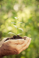 Young plant in hands against green spring background - PhotoDune Item for Sale