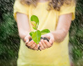 Child holding young plant in the rain - PhotoDune Item for Sale
