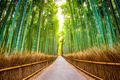 Bamboo Forest of Kyoto - PhotoDune Item for Sale