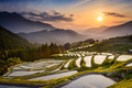 Rice Terraces at Sunset - PhotoDune Item for Sale