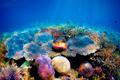 Underwater coral reef - PhotoDune Item for Sale