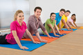 Multiethnic Group Of Friends Exercising - PhotoDune Item for Sale