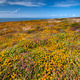 Colorful Meadow and Blue Sky - PhotoDune Item for Sale