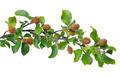 Beech Branch - PhotoDune Item for Sale