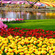 Spring yellow tulips and varicolored hyacinths - PhotoDune Item for Sale