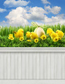 Happy Easter Spring background/backdrop - PhotoDune Item for Sale