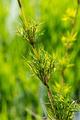 flower grass - PhotoDune Item for Sale