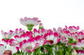 Beautiful pink flowers and green grass - PhotoDune Item for Sale