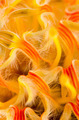 Pincushion Protea - PhotoDune Item for Sale