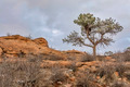 pine tree on sandstome cliff - PhotoDune Item for Sale