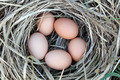 Chicken Eggs in Arranging Nest - Easter Composition - PhotoDune Item for Sale
