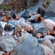 River Water And Stones - VideoHive Item for Sale