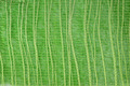 Green background - PhotoDune Item for Sale