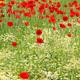meadow with wild flowers spring season - PhotoDune Item for Sale