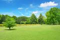 Beautiful meadow in the park - PhotoDune Item for Sale