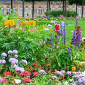Blossoming flowerbeds in the park - PhotoDune Item for Sale