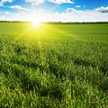 Beautiful sunset on green field - PhotoDune Item for Sale