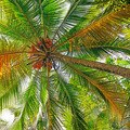 coconut tree background - PhotoDune Item for Sale