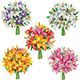 Set of Lilies Bouquets - GraphicRiver Item for Sale