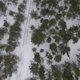 Flying Above Winter Forest in Cloudy Weather - VideoHive Item for Sale