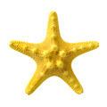 Yellow starfish - PhotoDune Item for Sale