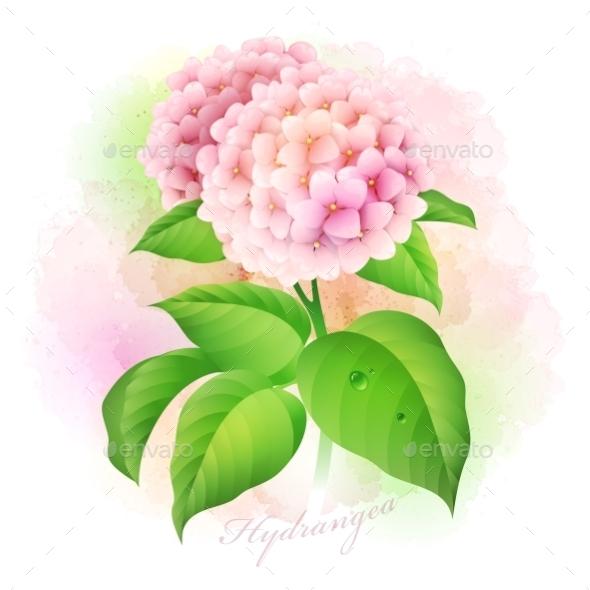 GraphicRiver Hydrangea Botanical 10629588