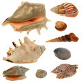 Seashell collection isolated on the white background - PhotoDune Item for Sale