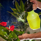 Florist is cleaning his plants - PhotoDune Item for Sale