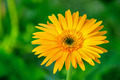 Macro view of yellow flower - PhotoDune Item for Sale