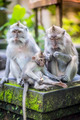 Long Tailed Macaque with her Infant.Bali. - PhotoDune Item for Sale